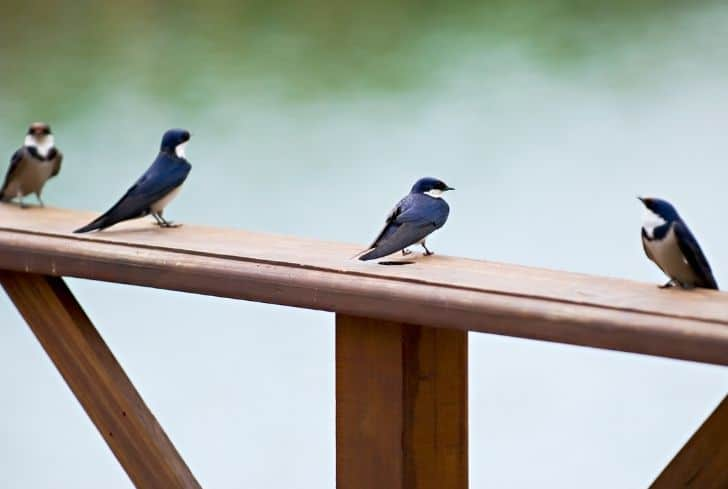 birds-sitting-on-porch-railing
