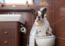 Can You Flush Dog Poop Down the Toilet? (And Ways to Dispose of)