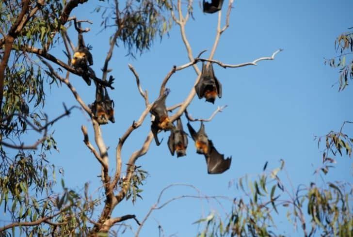 bats-hanging-on-tree
