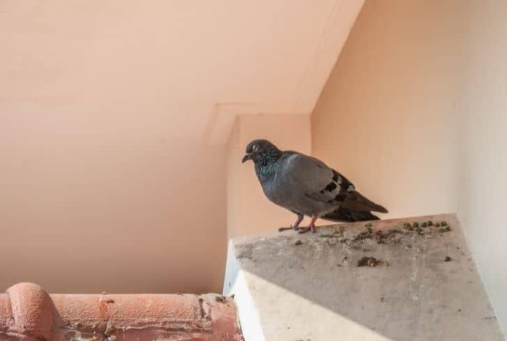 birds-pooping-on-deck