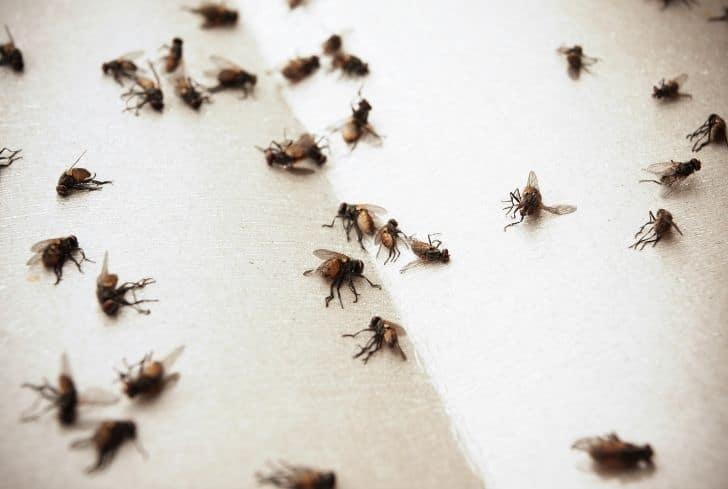 flies-on-floor