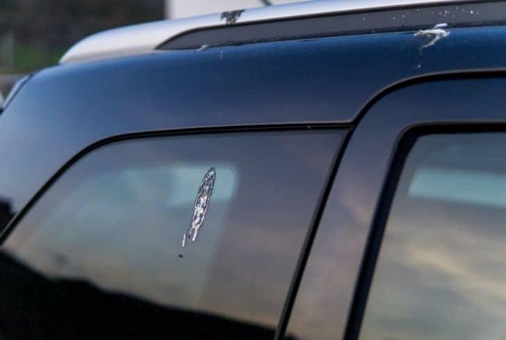 bird-poop-on-car-window