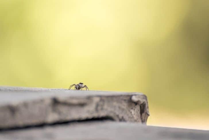 spider-crawling-on-balcony