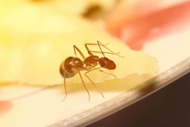 ant-walking-on-drawer