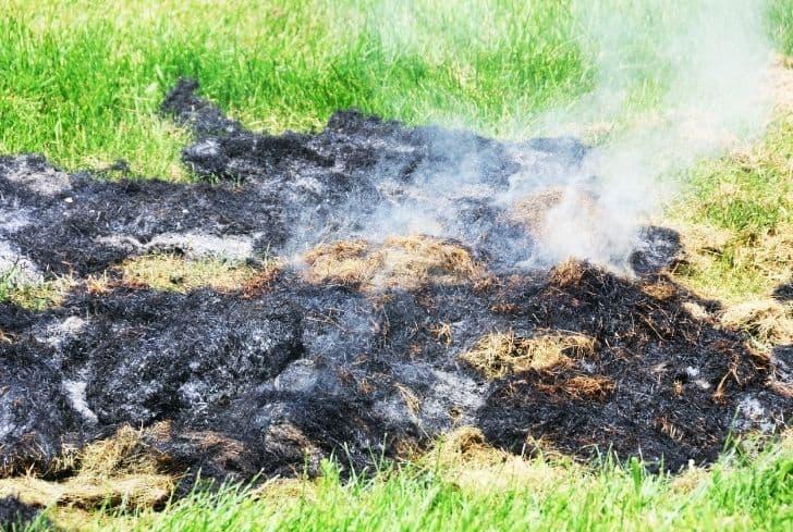 burning-grass