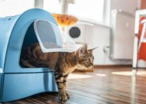 7+ Amazing Ways To Get Rid of Bugs in the Cat Litter Box