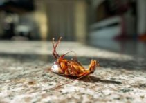 10 Incredible Ways to Get Rid of Cockroaches in the Garage