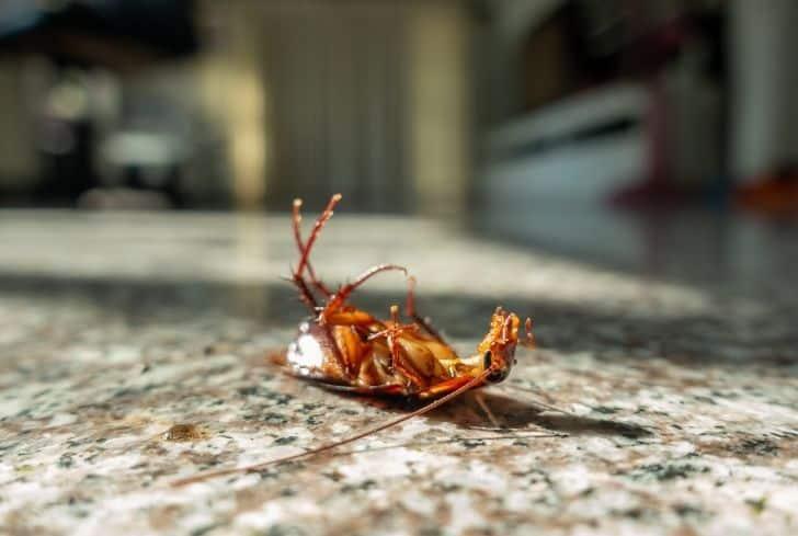 roaches-in-garage