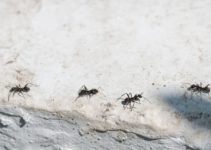 Can Ants Eat Through Concrete? (And Ways to Get Rid of Them)