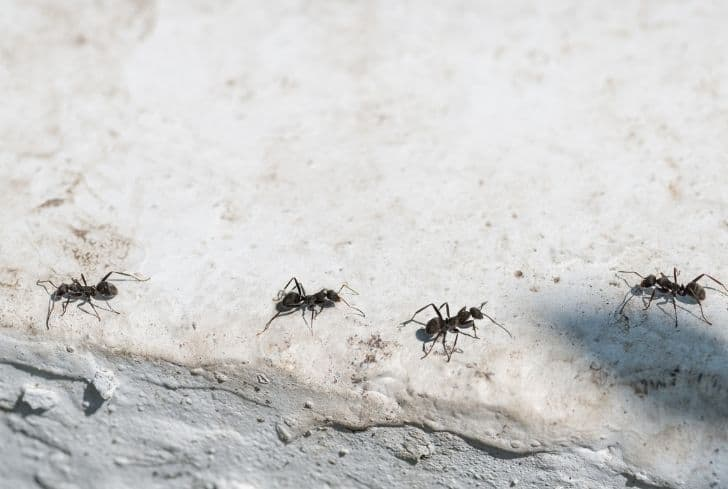 walking-ants-on-concrete