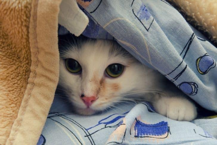 hiding-cat-under-bed-sheet